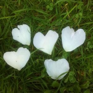 Hjerter-af-rosenblade